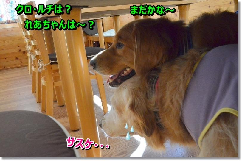 DSC_7973_20151027215545620.jpg