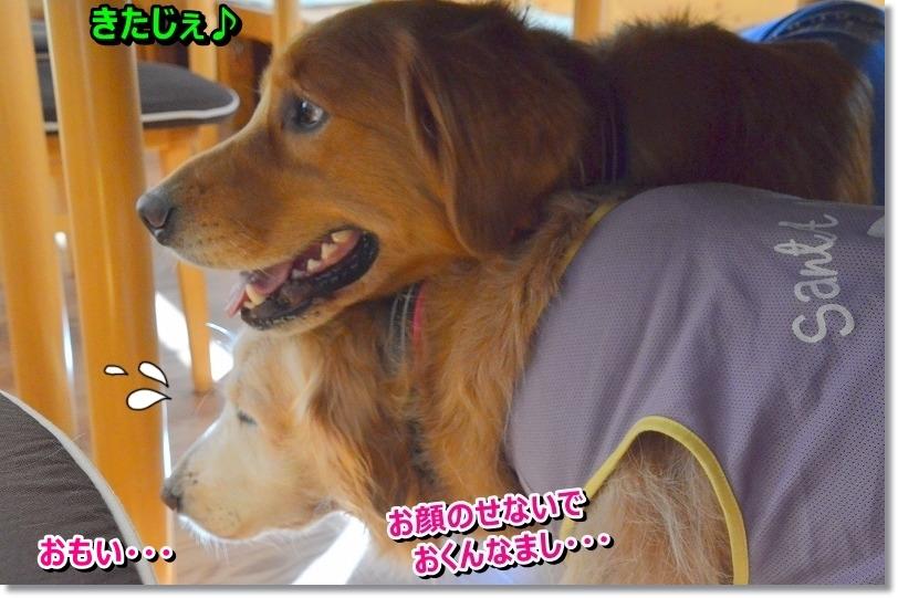 DSC_7974_20151027215546056.jpg