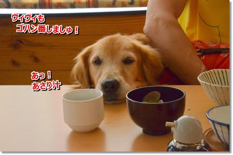 DSC_7992_20151027215640d57.jpg