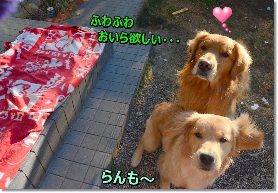 DSC_8020.jpg