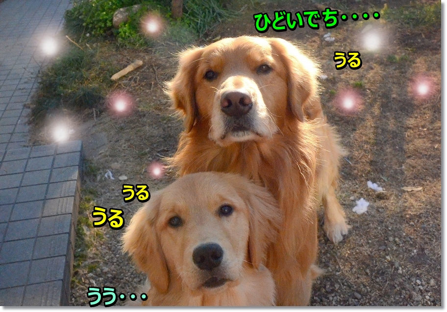 DSC_8025_201603092023486d0.jpg