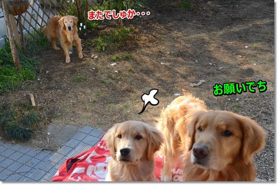 DSC_8043korinaine.jpg