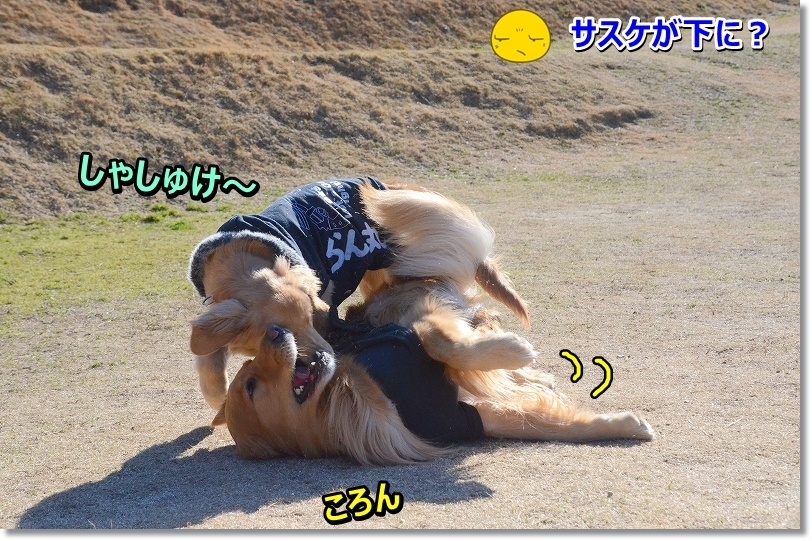 DSC_8171_20160211002409d07.jpg