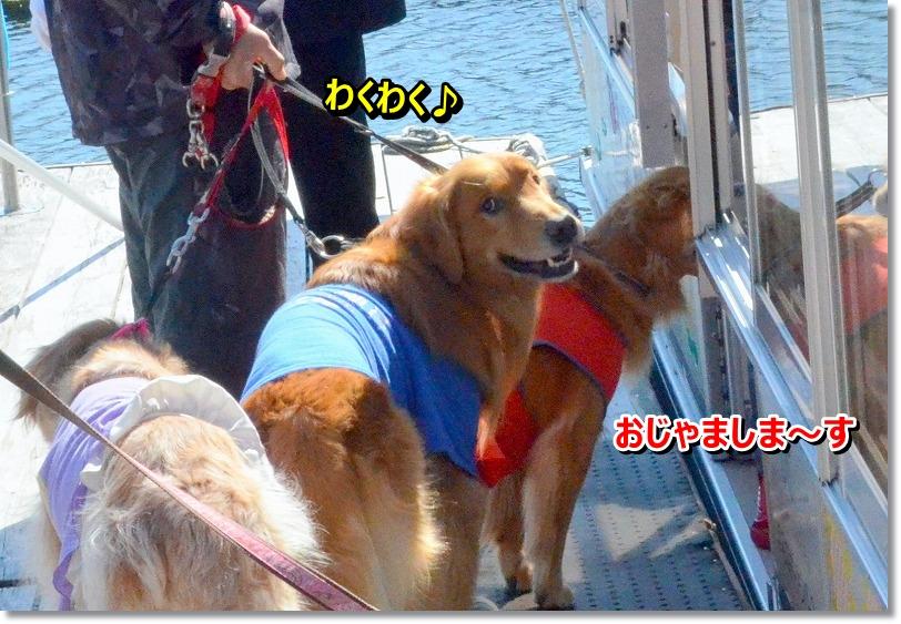 DSC_8251_20151029194537187.jpg