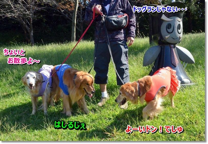 DSC_8293_20151030145950a20.jpg