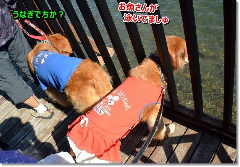 DSC_8320_20151030161638e4f.jpg