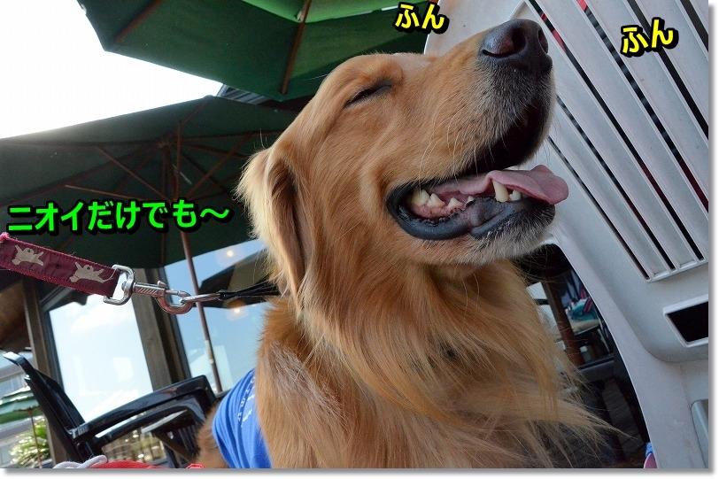 DSC_8332.jpg