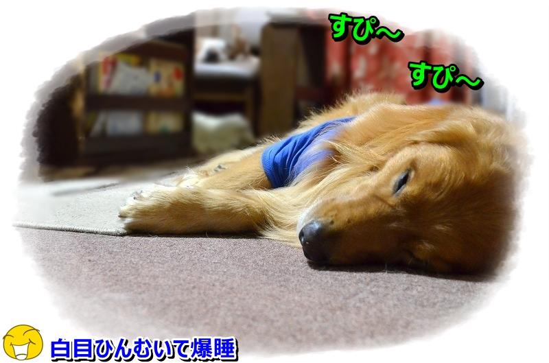 DSC_8342_201510301617220be.jpg