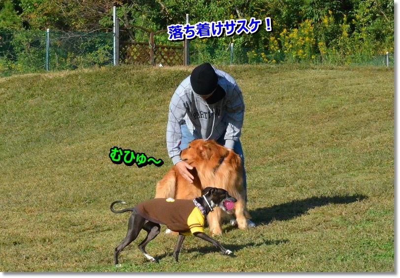 DSC_8482_20151111221534905.jpg