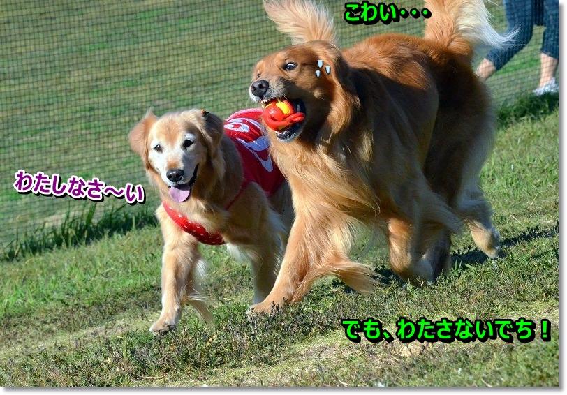 DSC_8515_20151112112917785.jpg