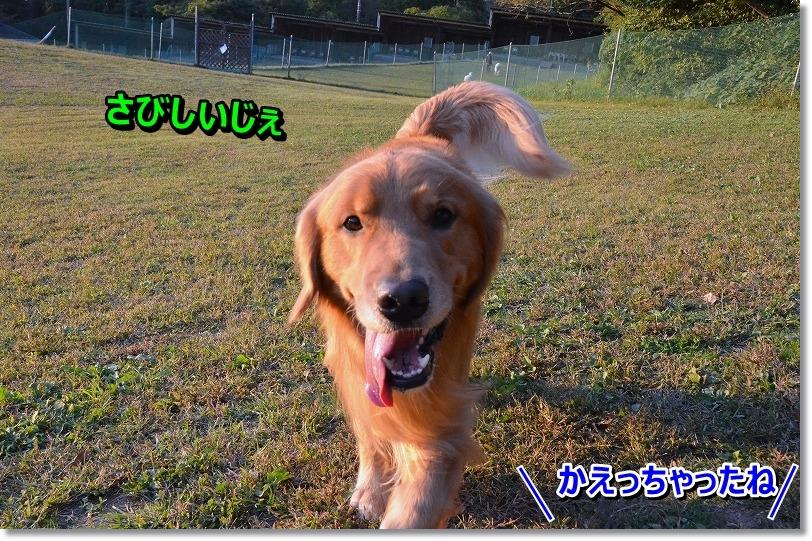 DSC_8574_201511131756539bd.jpg