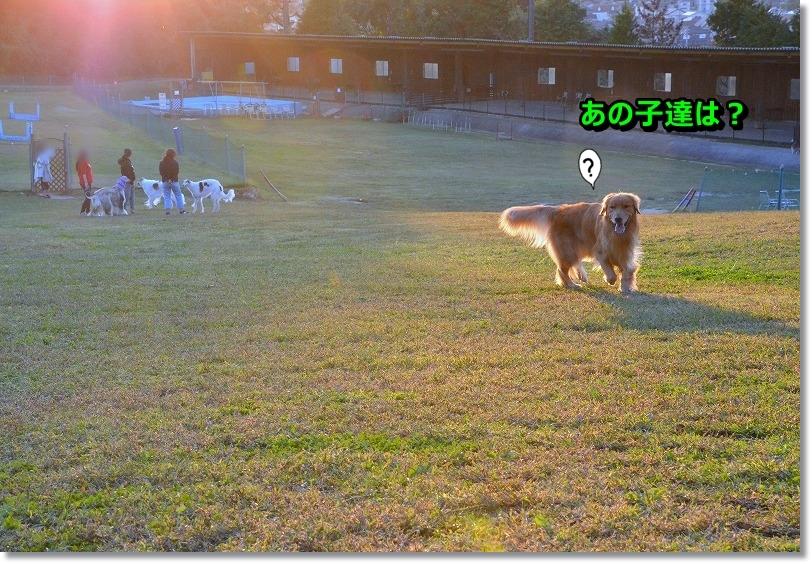 DSC_8588_20151113175718e4e.jpg