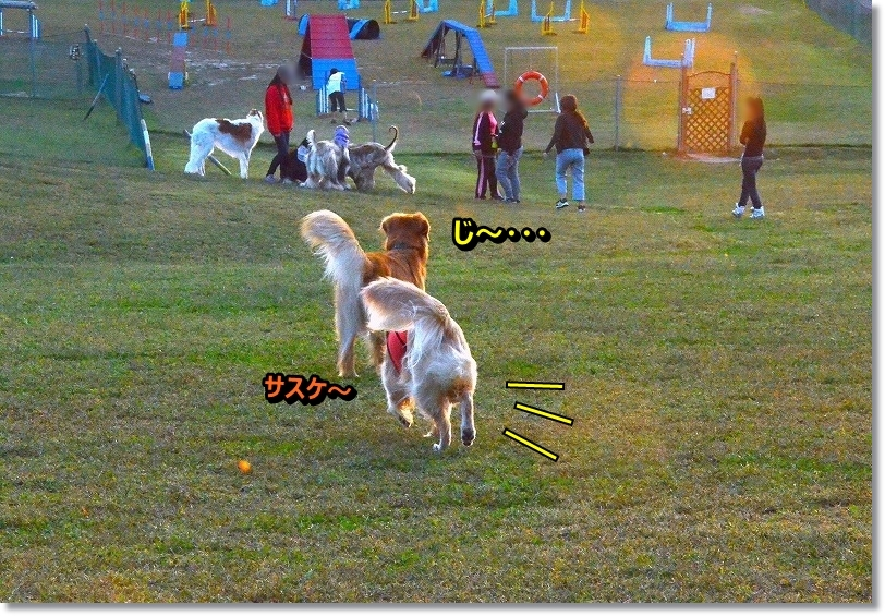 DSC_8632_20151113175812d57.jpg