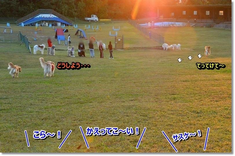 DSC_8636_201511131758343cb.jpg