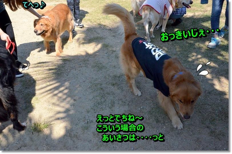 DSC_8678_20151117202451fcc.jpg