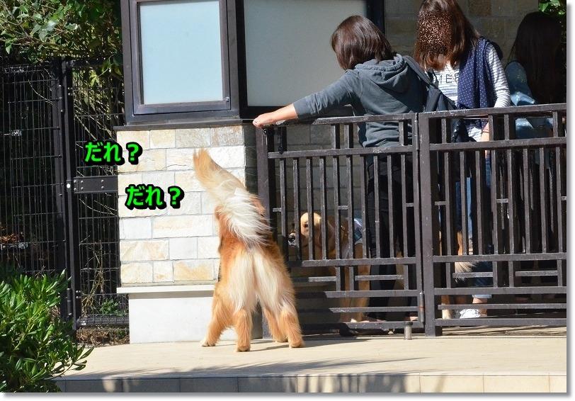 DSC_8720_201511172026128ef.jpg