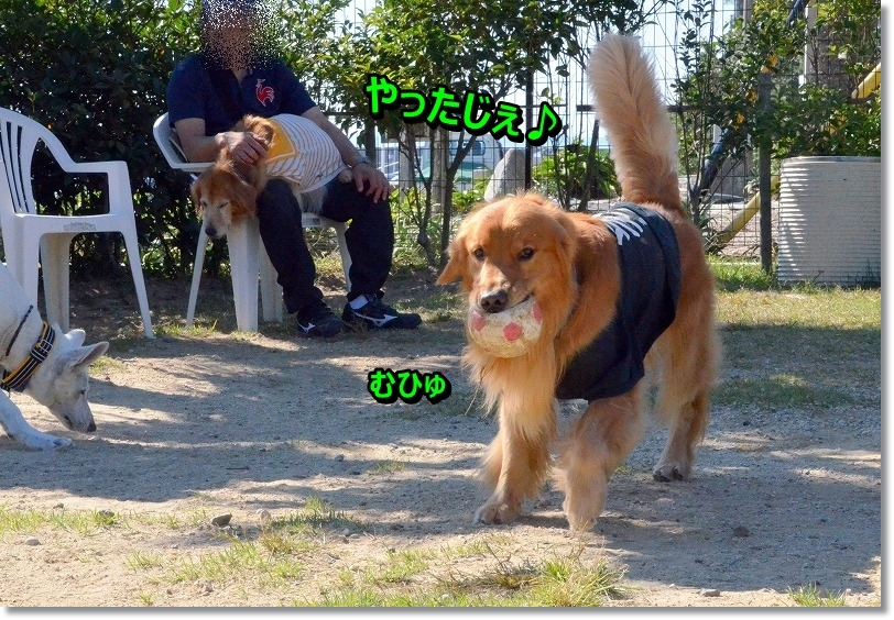 DSC_8820_20151119195146283.jpg