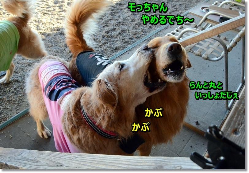 DSC_8853_201602110028509ad.jpg