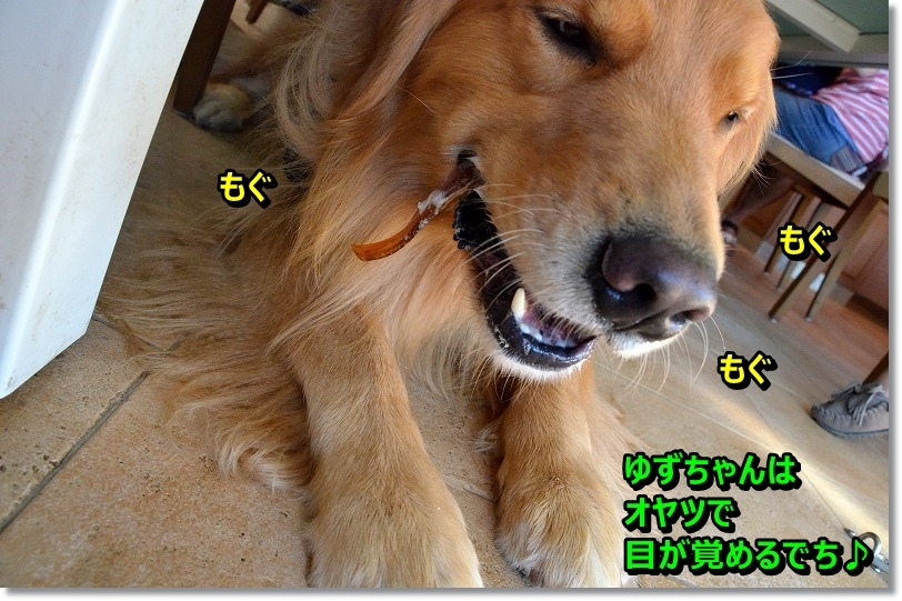 DSC_8893_20151121102535565.jpg