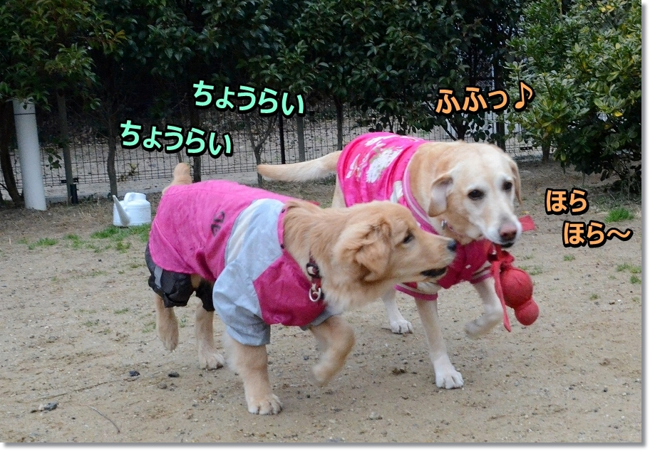 DSC_8964_20160307210304e8c.jpg