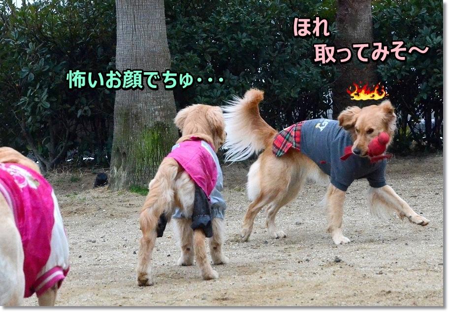 DSC_8969agenai.jpg