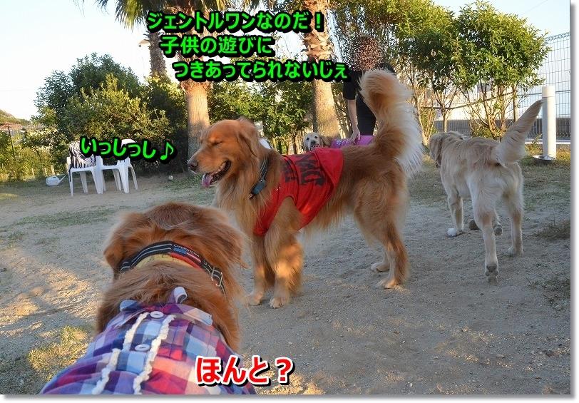 DSC_9288_201511261958214c7.jpg