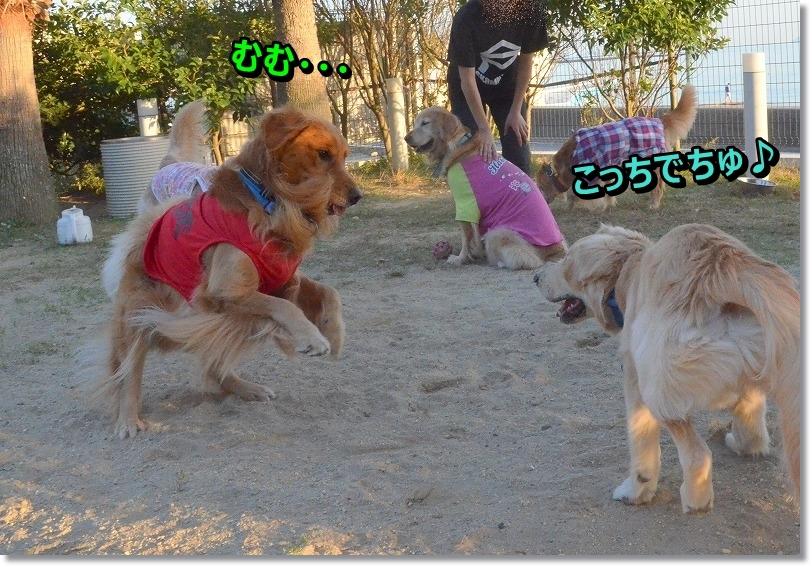 DSC_9299_20151126195836d01.jpg