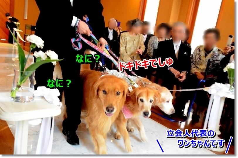DSC_9476_20151109012101003.jpg