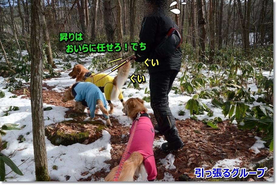 DSC_9759_2016022923050022b.jpg