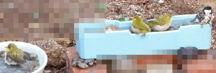 ①野鳥たちの混浴
