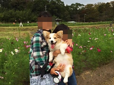 ミルクちゃん散歩01