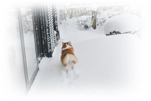 大雪1.25-1