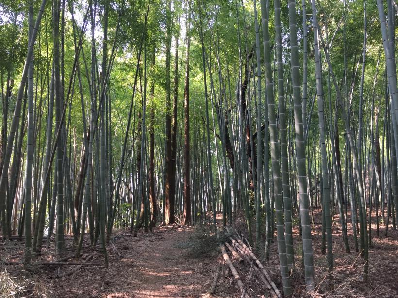 arashiyama103.jpg