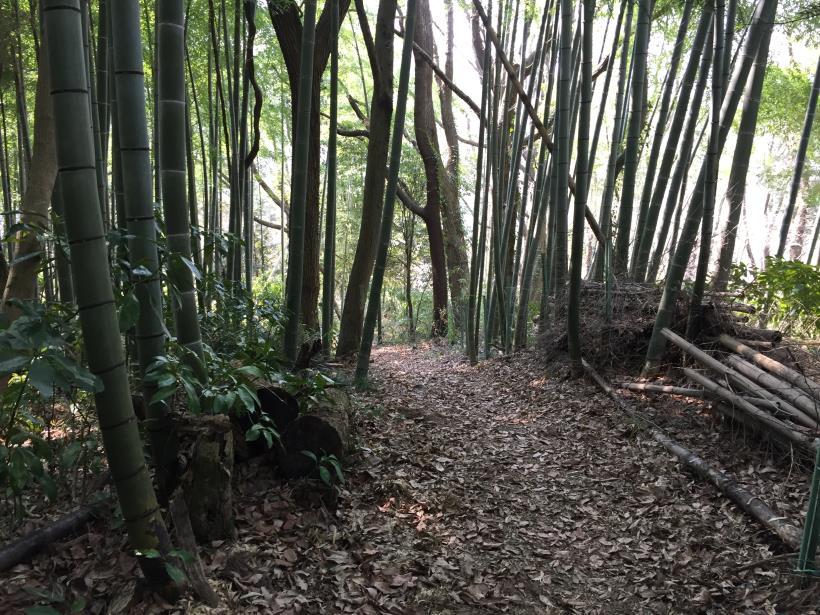arashiyama105.jpg