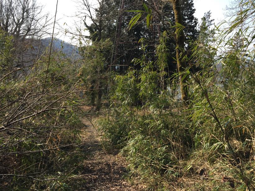 arashiyama111.jpg