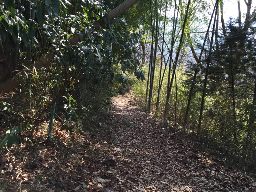 arashiyama117.jpg