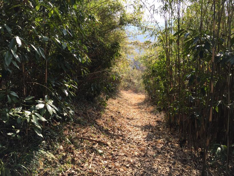 arashiyama120.jpg