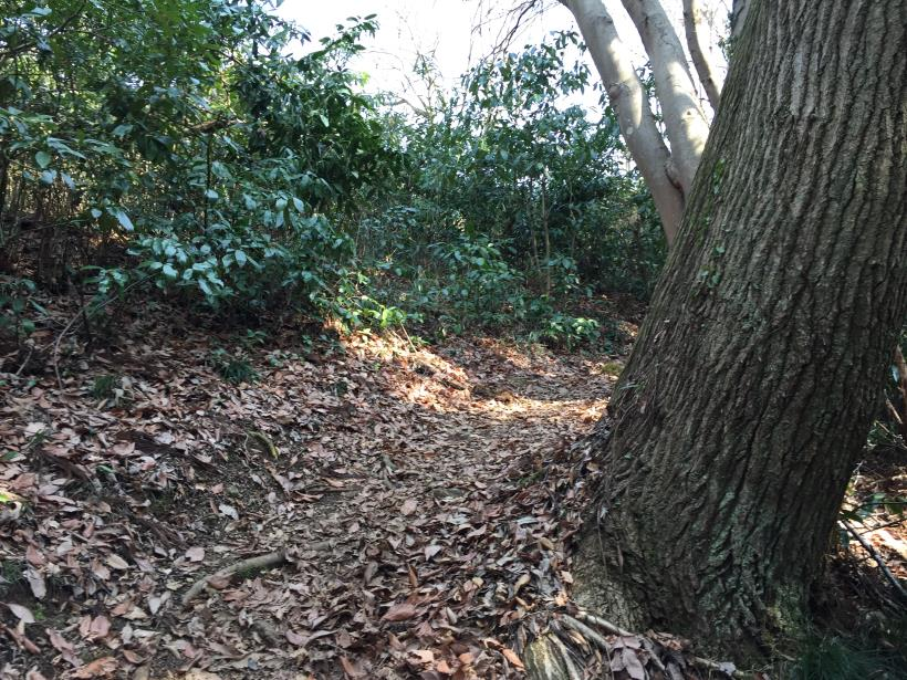 arashiyama122.jpg