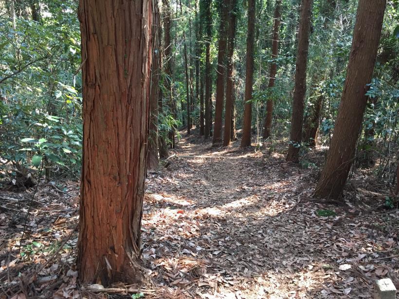 arashiyama123.jpg