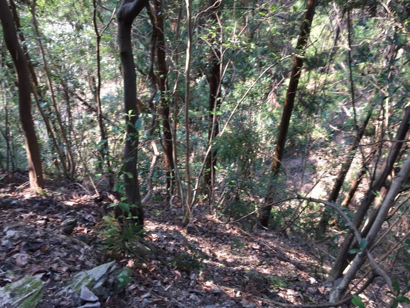 arashiyama136.jpg