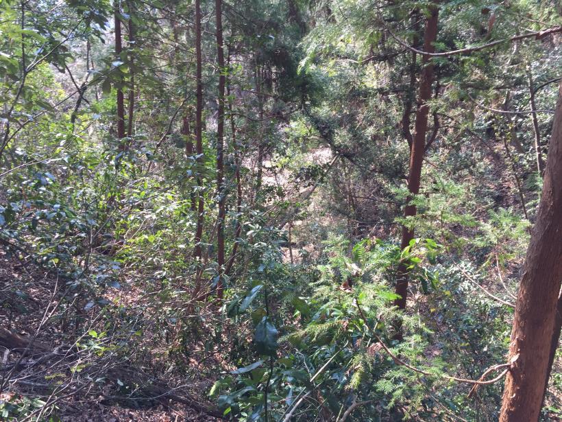 arashiyama154.jpg