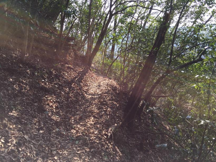 arashiyama155.jpg