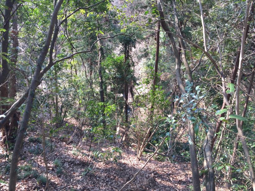 arashiyama156.jpg