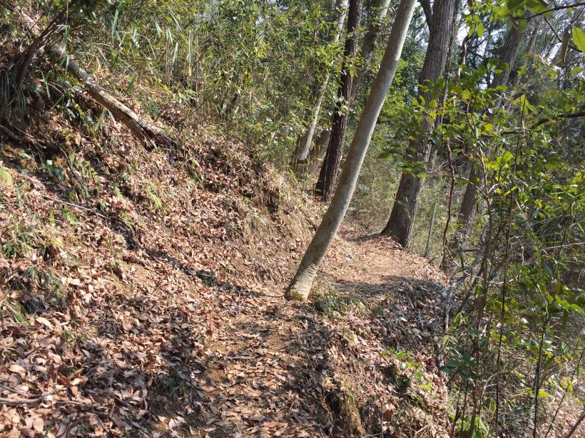 arashiyama157.jpg