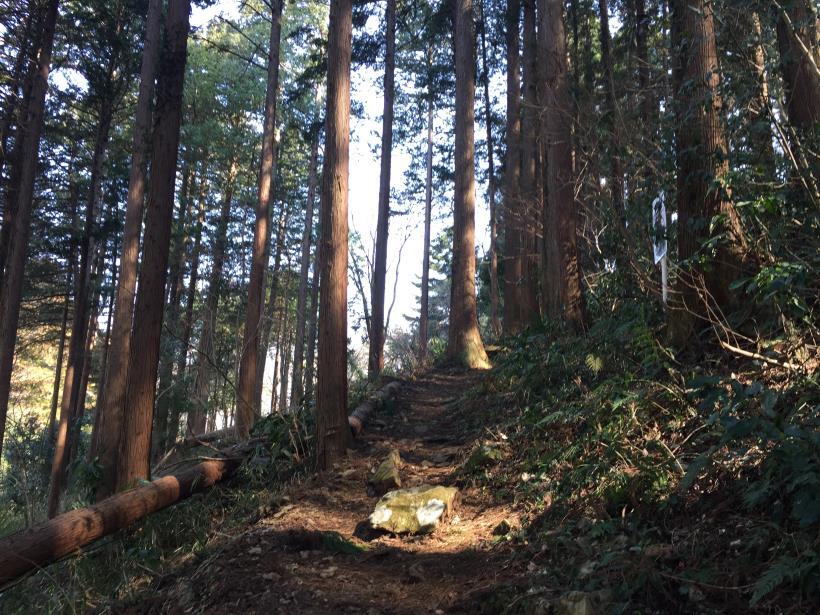 arashiyama16.jpg