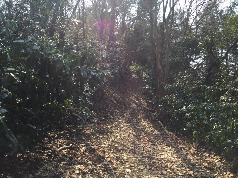 arashiyama41.jpg