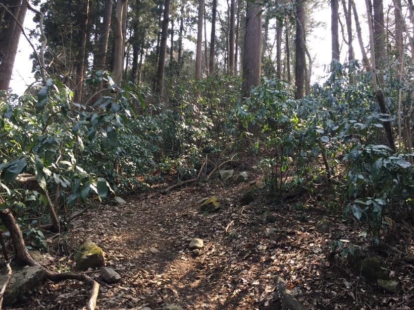 arashiyama45.jpg