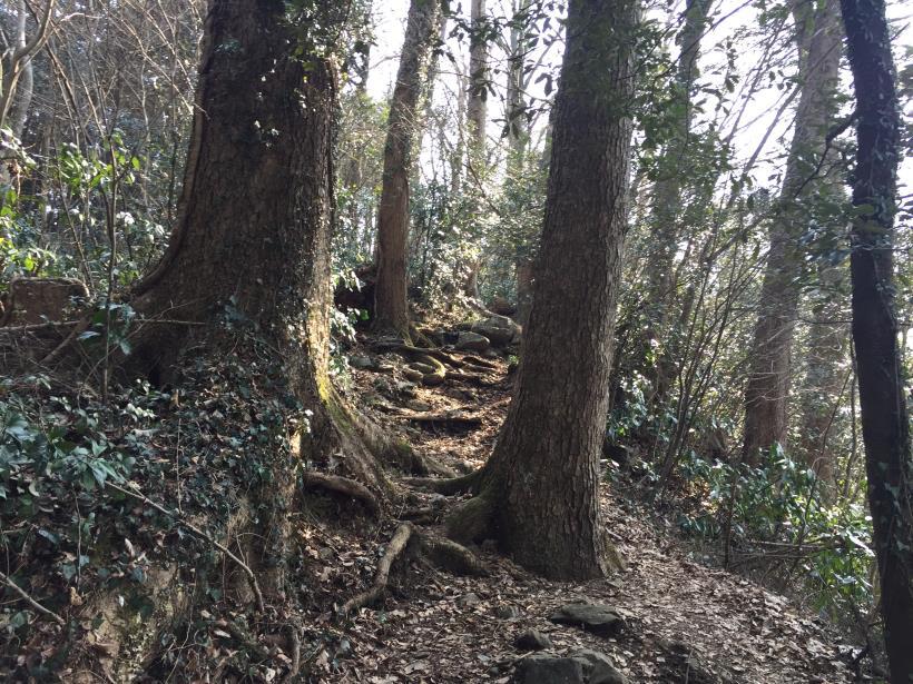 arashiyama49.jpg