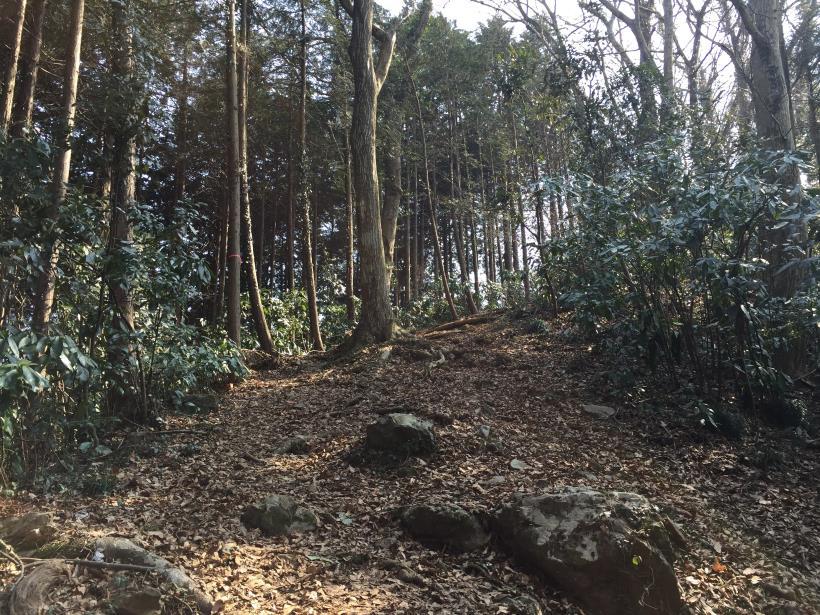 arashiyama50.jpg