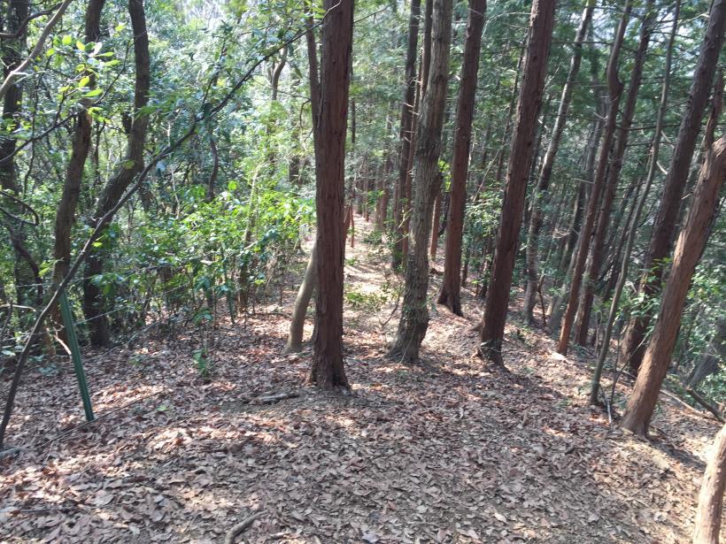 arashiyama73.jpg